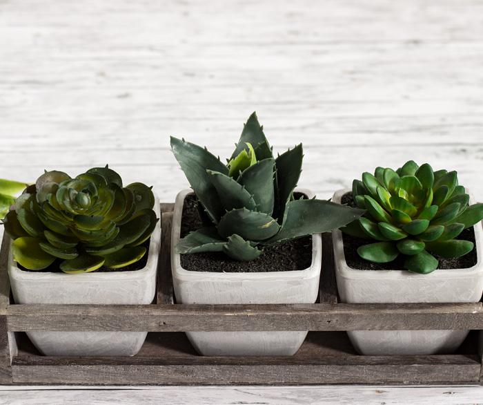 succulents-ebergreen gallery-artfleur